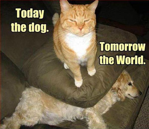 Today the dog. Tomorrow the world Picture Quote #1