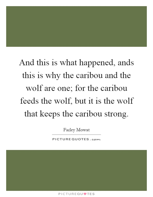 And this is what happened, ands this is why the caribou and the wolf are one; for the caribou feeds the wolf, but it is the wolf that keeps the caribou strong Picture Quote #1