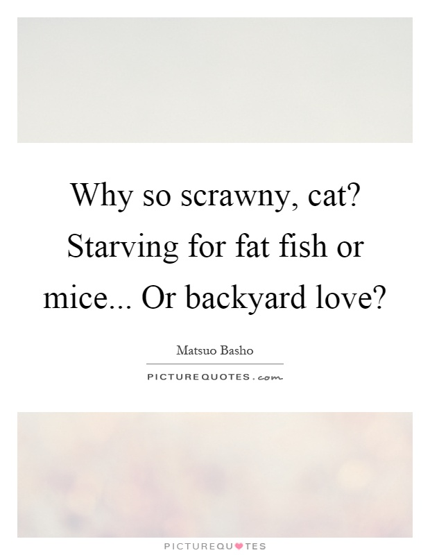 Why so scrawny, cat? Starving for fat fish or mice... Or backyard love? Picture Quote #1