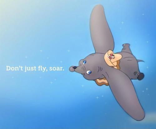 Don't just fly, soar Picture Quote #1