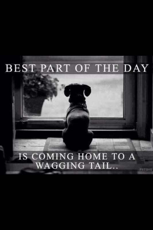 Best part of the day is coming home to a wagging tail Picture Quote #1