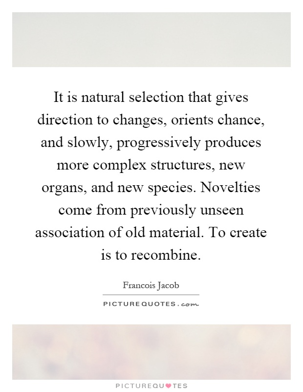 It is natural selection that gives direction to changes, orients chance, and slowly, progressively produces more complex structures, new organs, and new species. Novelties come from previously unseen association of old material. To create is to recombine Picture Quote #1