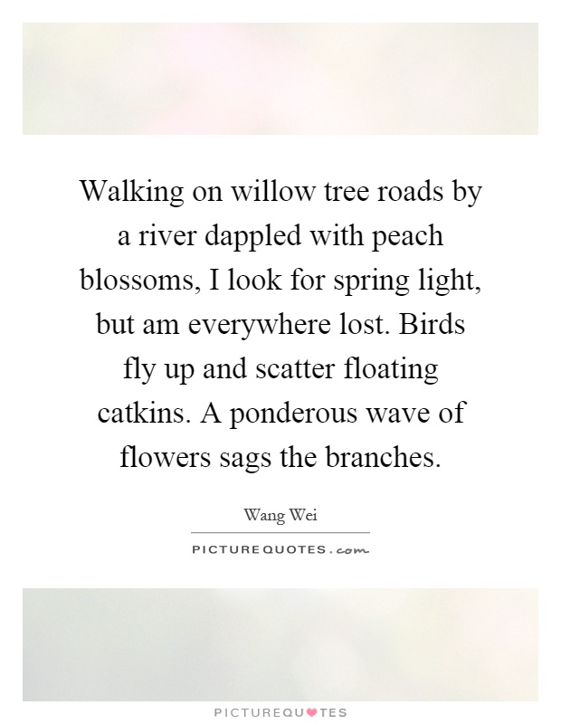 Walking on willow tree roads by a river dappled with peach blossoms, I look for spring light, but am everywhere lost. Birds fly up and scatter floating catkins. A ponderous wave of flowers sags the branches Picture Quote #1