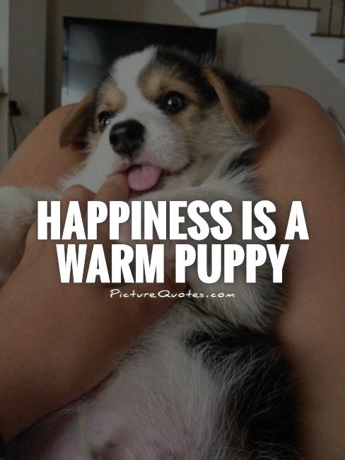 Happiness is a warm puppy Picture Quote #1