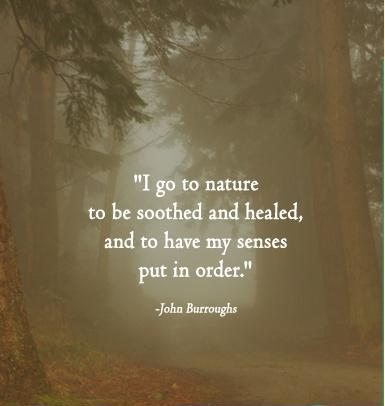 I go to nature to be soothed and healed, and to have my senses put in order Picture Quote #1