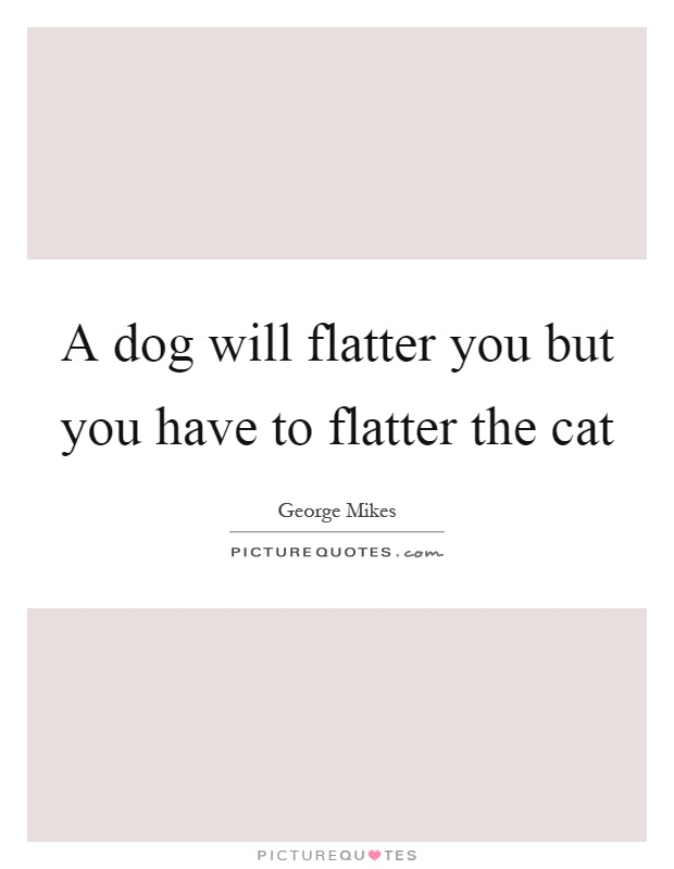 A dog will flatter you but you have to flatter the cat Picture Quote #1