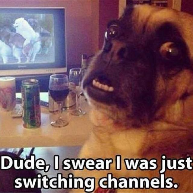 Dude, I swear I was just switching channels Picture Quote #1