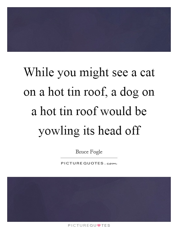 While you might see a cat on a hot tin roof, a dog on a hot tin roof would be yowling its head off Picture Quote #1