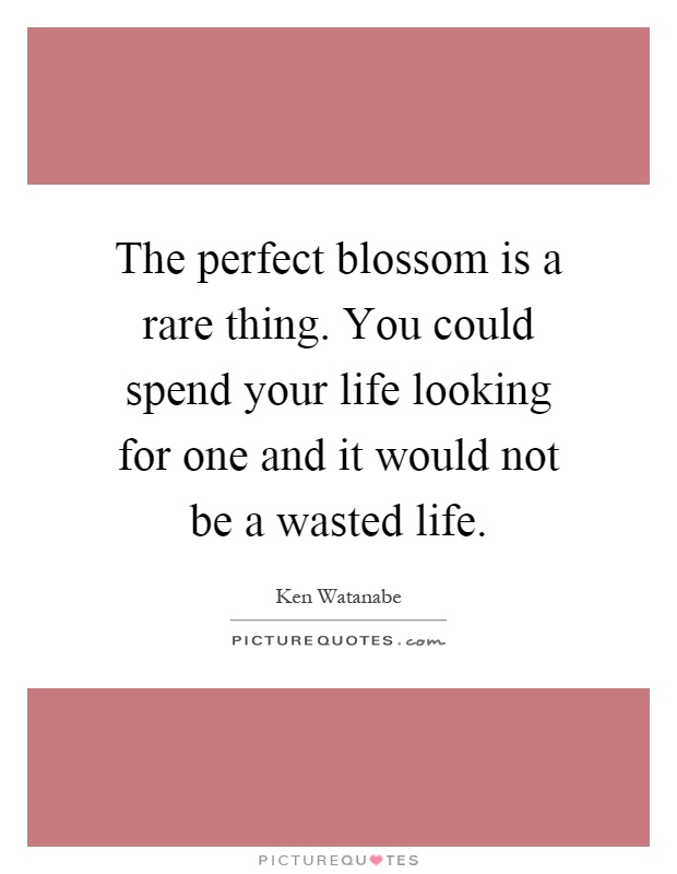 The perfect blossom is a rare thing. You could spend your life looking for one and it would not be a wasted life Picture Quote #1