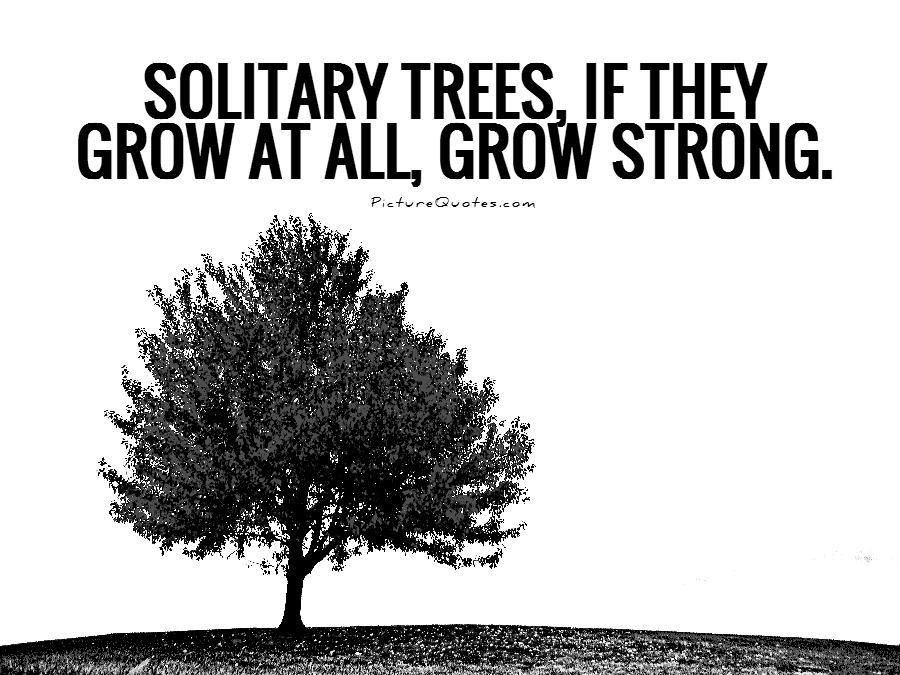 Solitary trees, if they grow at all, grow strong Picture Quote #1