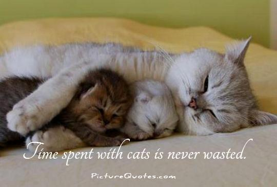 Time spent with cats is never wasted Picture Quote #1