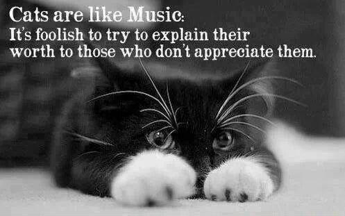 Cats are like music. It's foolish to try to explain their worth to those who don't appreciate them Picture Quote #1