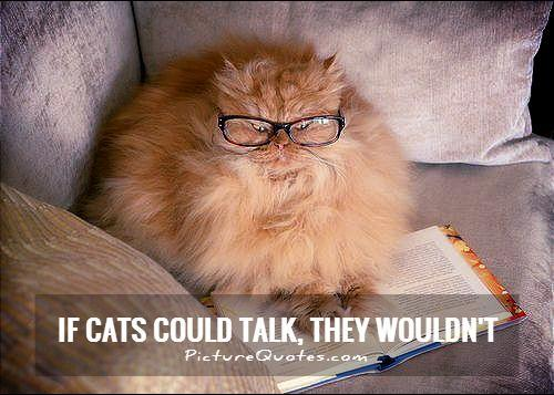 If cats could talk, they wouldn't Picture Quote #1