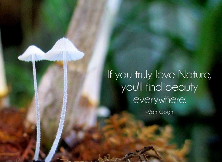 If you truly love nature, you will find beauty everywhere. Picture Quote #1