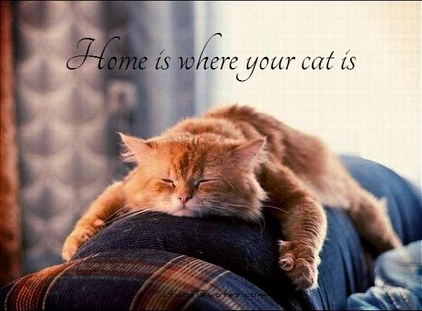 Home is where your cat is. Picture Quote #1