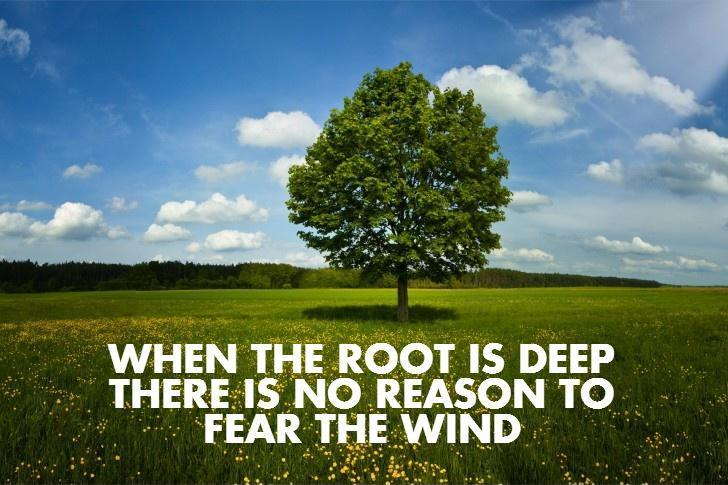 When the root is deep there is no reason to fear the wind Picture Quote #1