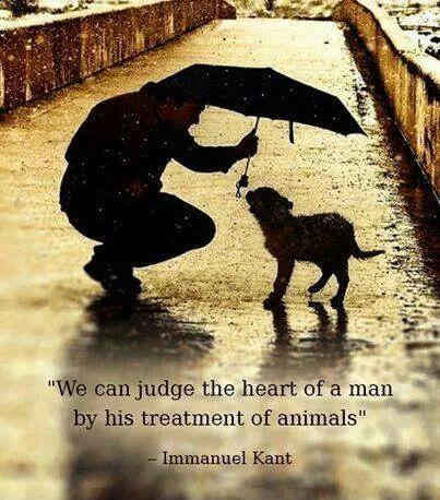 We can judge the heart of a man by his treatment of animals Picture Quote #1