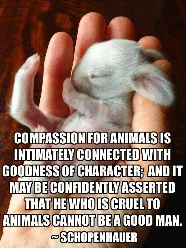 Compassion for animals is intimately associated with goodness of character, and it may be confidently asserted that he who is cruel to animals cannot be a good man. Picture Quote #1