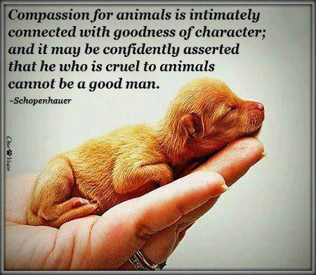 Compassion for animals is intimately associated with goodness of character, and it may be confidently asserted that he who is cruel to animals cannot be a good man. Picture Quote #2