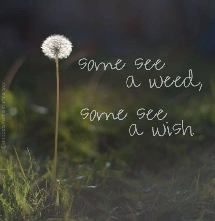 Some see a weed, some see a wish Picture Quote #1