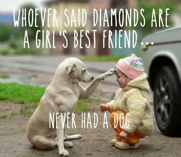 Whoever said diamonds are a girl's best friend never had a dog Picture Quote #1