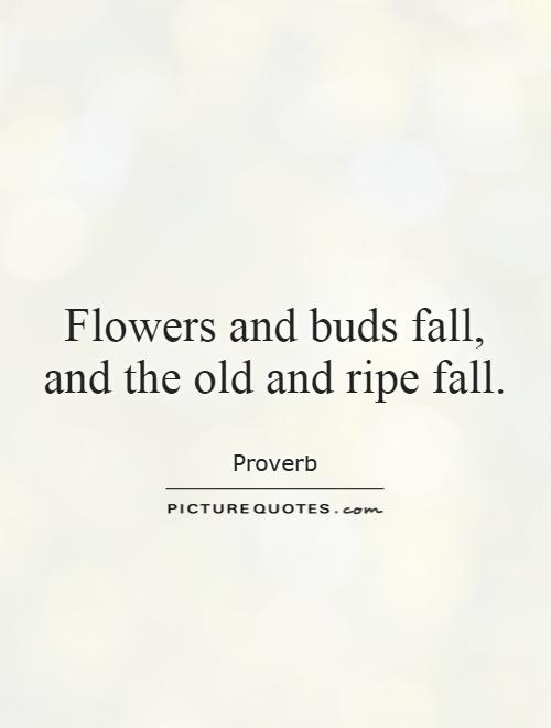 Flowers And Buds Fall And The Old And Ripe Fall Picture Quotes