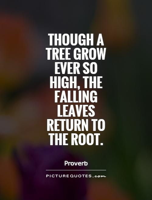 Though a tree grow ever so high, the falling leaves return to the root Picture Quote #1