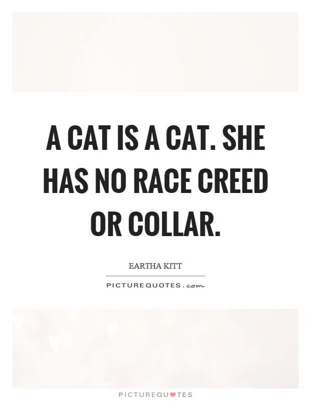 A cat is a cat. She has no race creed or collar Picture Quote #1