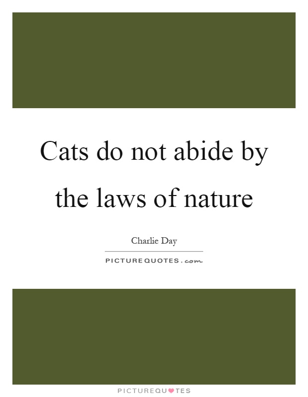 Cats do not abide by the laws of nature Picture Quote #1