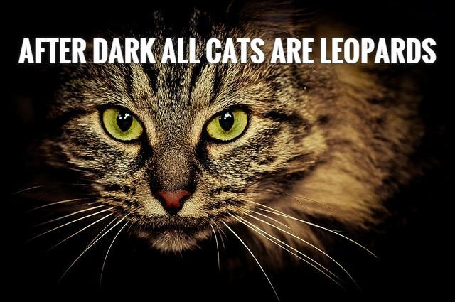 After dark all cats are leopards Picture Quote #1