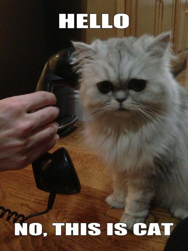 Hello. No this is cat Picture Quote #1
