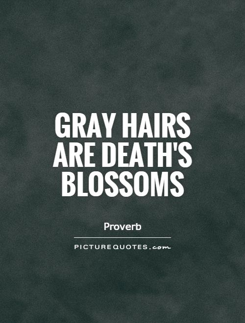 Gray hairs are death's blossoms Picture Quote #1