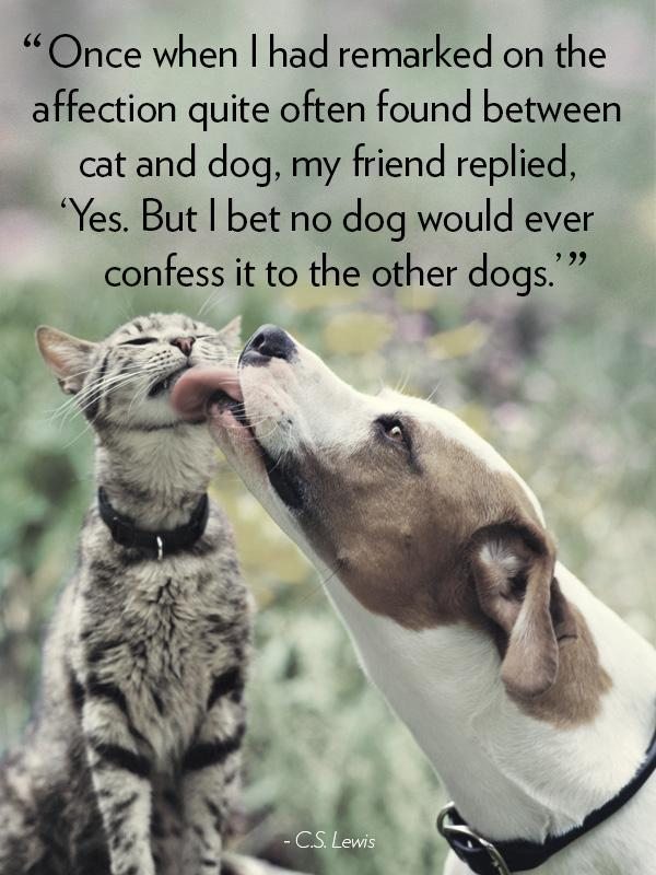 Once when I had remarked on the affection quite often found between cat and dog, my friend replied, Yes. But I bet no dog would ever confess it to the other dogs Picture Quote #1