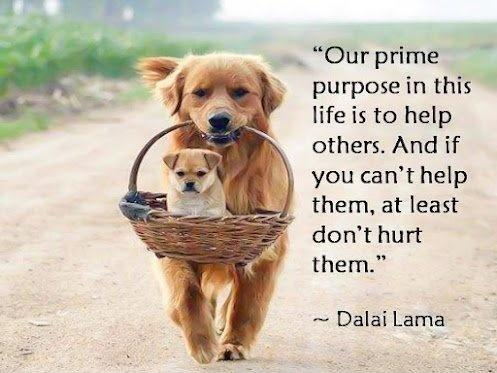 Our prime purpose in this life is to help others. And if you can't help them, at least don't hurt them Picture Quote #2