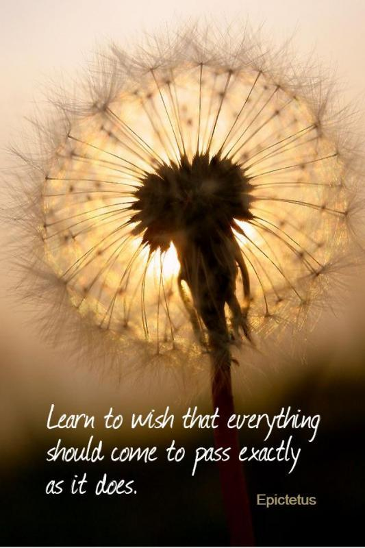 Learn to wish that everything should come to pass exactly as it does Picture Quote #1