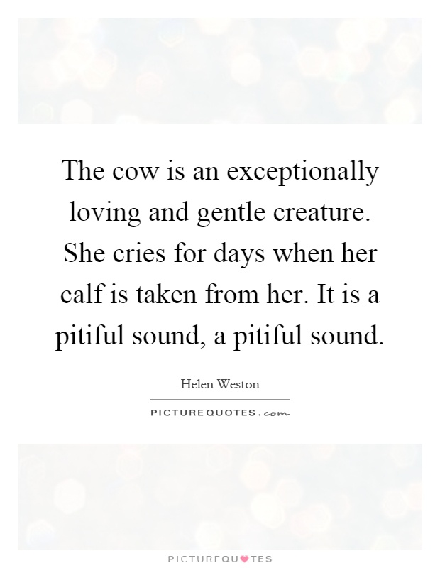 The cow is an exceptionally loving and gentle creature. She cries for days when her calf is taken from her. It is a pitiful sound, a pitiful sound Picture Quote #1
