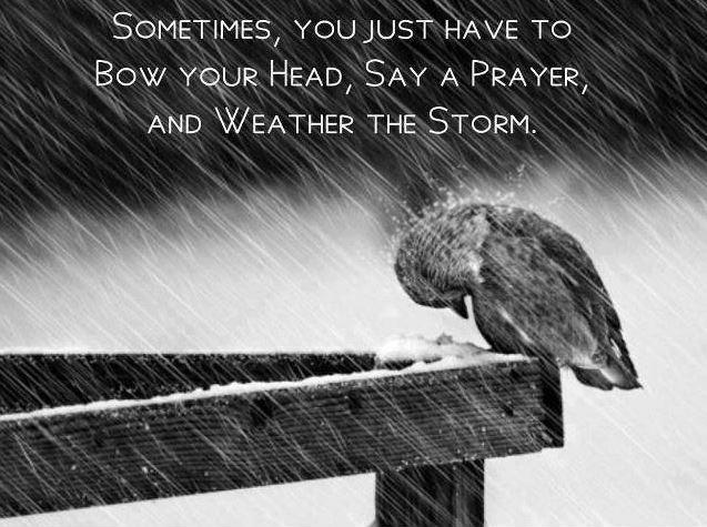 Sometimes you just have to bow your head, say a prayer, and weather the storm Picture Quote #1