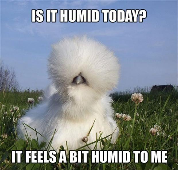 Is it humid today? It feels a bit humid to me Picture Quote #2