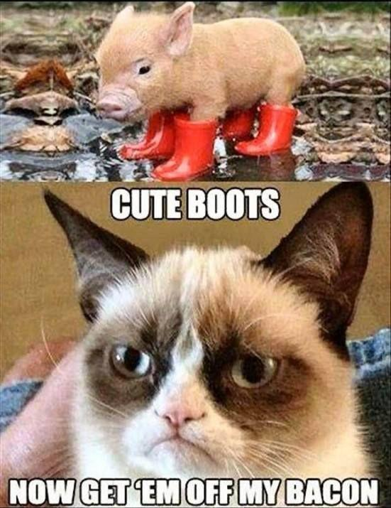 Cute boots. Now get 'em off my bacon Picture Quote #1