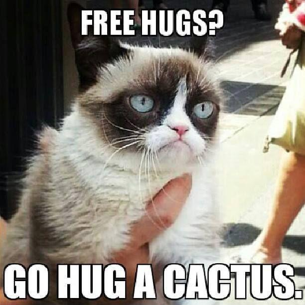 Free hugs? Go hug a cactus Picture Quote #1