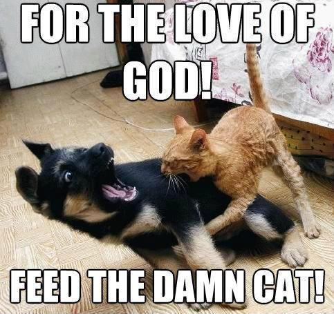 For the love of God! feed the damn cat Picture Quote #1