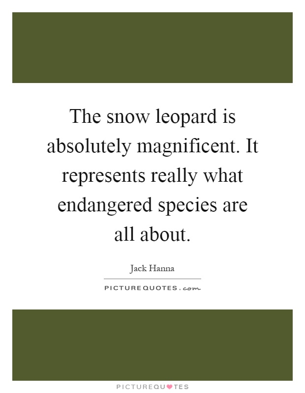 The snow leopard is absolutely magnificent. It represents really what endangered species are all about Picture Quote #1