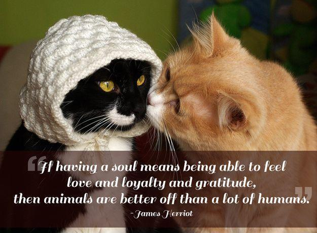 If having a soul means being able to feel love and loyalty and gratitude, then animals are better off than a lot of humans Picture Quote #1