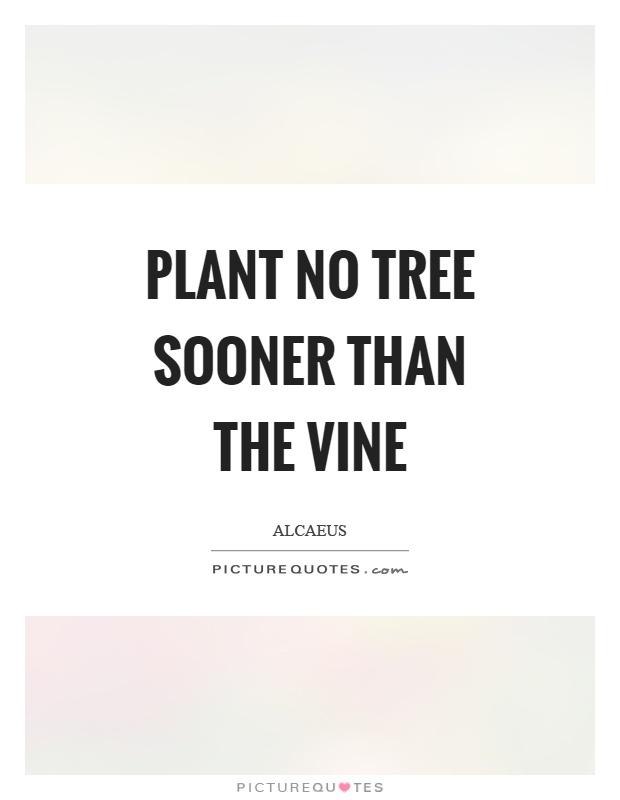 Plant No Tree Sooner Than The Vine