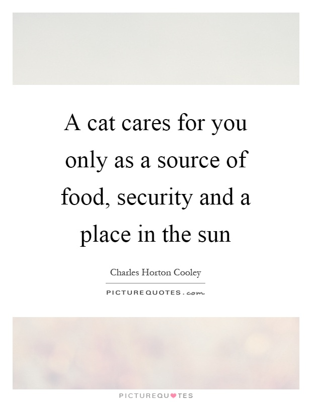A cat cares for you only as a source of food, security and a place in the sun Picture Quote #1