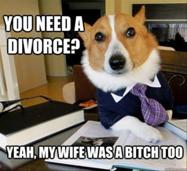 You need a divorce? Yeah, my wife was a bitch too Picture Quote #1