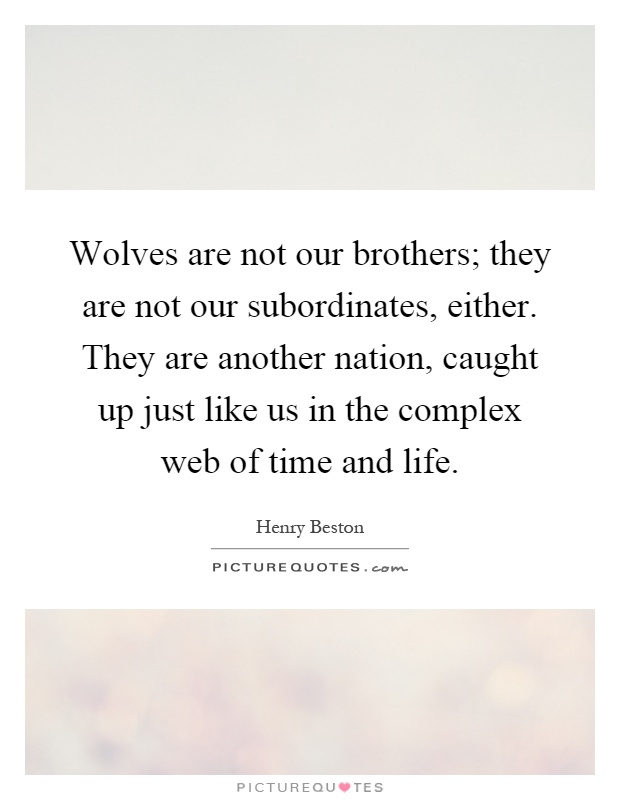 Wolves are not our brothers; they are not our subordinates, either. They are another nation, caught up just like us in the complex web of time and life Picture Quote #1
