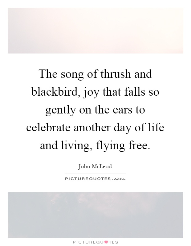The song of thrush and blackbird, joy that falls so gently on the ears to celebrate another day of life and living, flying free Picture Quote #1