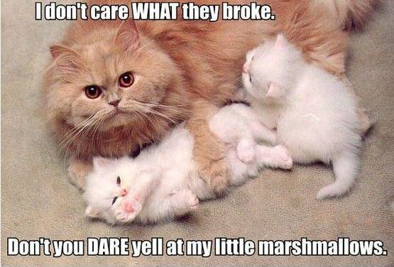I don't care what they broke, don't you dare yell at my little marshmallows Picture Quote #1