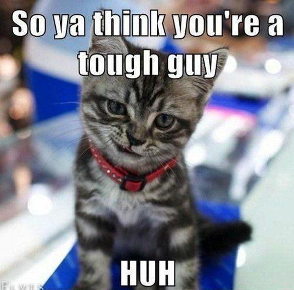 So ya think you're a tough guy huh? Picture Quote #1